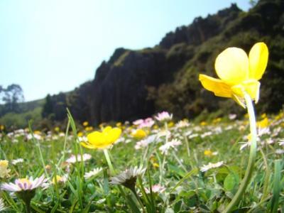 Bonita primavera.